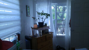 Daily or short term room rent