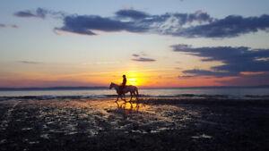 Natural Horsemanship lessons and training