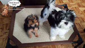 CAGELESS SITTING FOR SMALL DOGS IN SAFE,CLEAN HOME