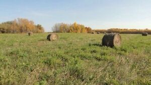 HAYLAND FOR SALE