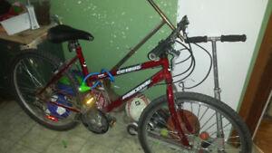 Teen-adult bike
