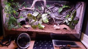 37 gallon custom terrarium great for geckos or similar pets