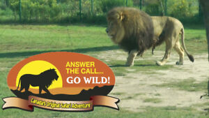 VIP Family Package to African Lion Safari-Entrance,  Tour Bus+++