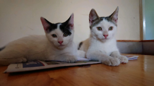 Kittens - 3 months old