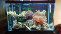 Marine Saltwater Fish and corals