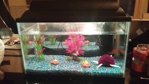 10 gallon fish tank with everything incl