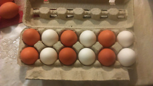Fresh farm eggs