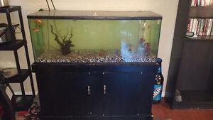 75g aquarium and all accessaries