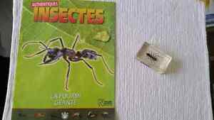 Collection d insectes Saguenay Saguenay-Lac-Saint-Jean image 6