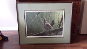 Limited edition print Spruce Grouse