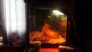 ***UPDATE-2 Leatherback Bearded Dragons- 1year old London Ontario image 3