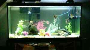 Extra-large 200 gallon fish tank..and stand...