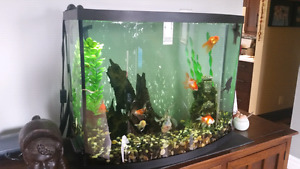 Bow front 38 gallon fishtank with fluval and whisper air pump