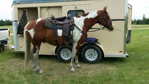 10 year old gelding for sale
