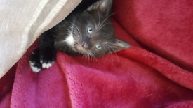 Pets in Dumfries and Galloway - Gumtree