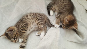 Kittens looking for their new home