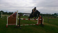 Looking for a serious rider to part board a show pony