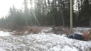 Fully Treed 2 acre Lot