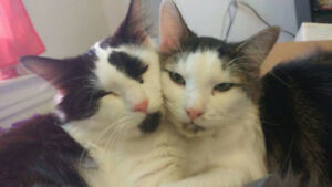 Two one year old cats to rehome