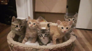 Gorgeous kittens for rehoming