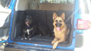 2 dogs who need a loving home
