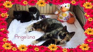 Angelina needs a home!