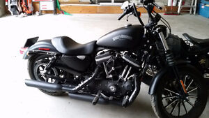 HD Iron 883 Sportster Black Low Kms 2013