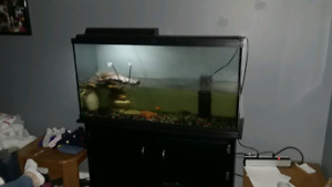 turtles and tank