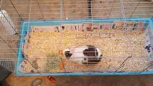 Free bunny rabbit ***** pending pick up ******