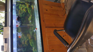 50 gallon fish tank and flowerhorn for sale