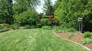 Spring / fall Clean Up Available for Properties / Lawn Clean Up London Ontario image 2