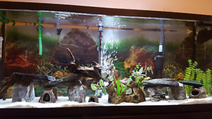 Beautiful 55gallon tank with all you need.
