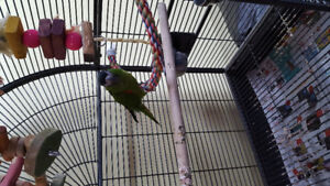Selling parrot. Maky :-)
