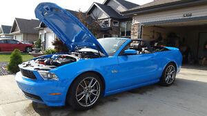 2011 Ford Mustang 5.0L GT Convertible 6 SPD Mint!!  Grabber Blue Edmonton Edmonton Area image 2