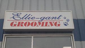 Ellie-Gant Grooming