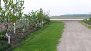 Wanted fruit trees