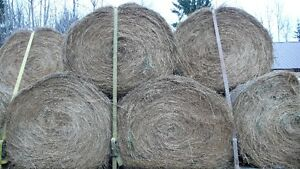 Hay for sale Williams Lake Cariboo Area image 3