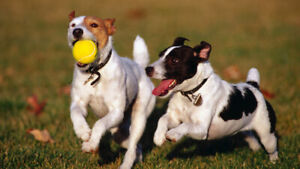 Free Dog Walk, Daycare or Boarding Services!