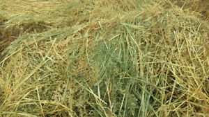 Green feed oats round bales.