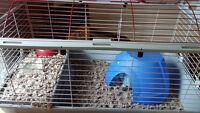 Albino Hedgehog for Sale to Good Home