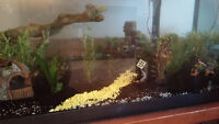 55 gallon fish tank and fish + filter + cleaning equipment