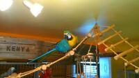 Oisellerie PLB à des oisillons de disponible!