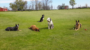 Dog Care Available  - In the comfort of OUR own home!