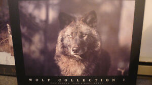 Wolf Collection I, Framed Photograph