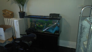 60 gal fish tank plus stand and filter.