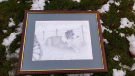 Beautiful Pencil Drawing of Dog