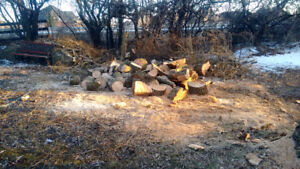 Small Tree removal 647-704-0175 stump grinding.