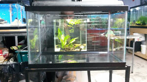10 gallon tank with stand and accessories