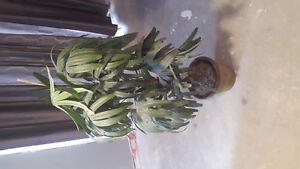 beautiful 4feet fake plant