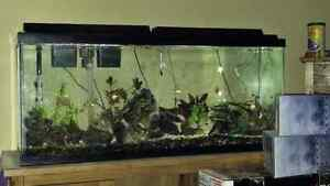 Aquarium 55 gallons full equip